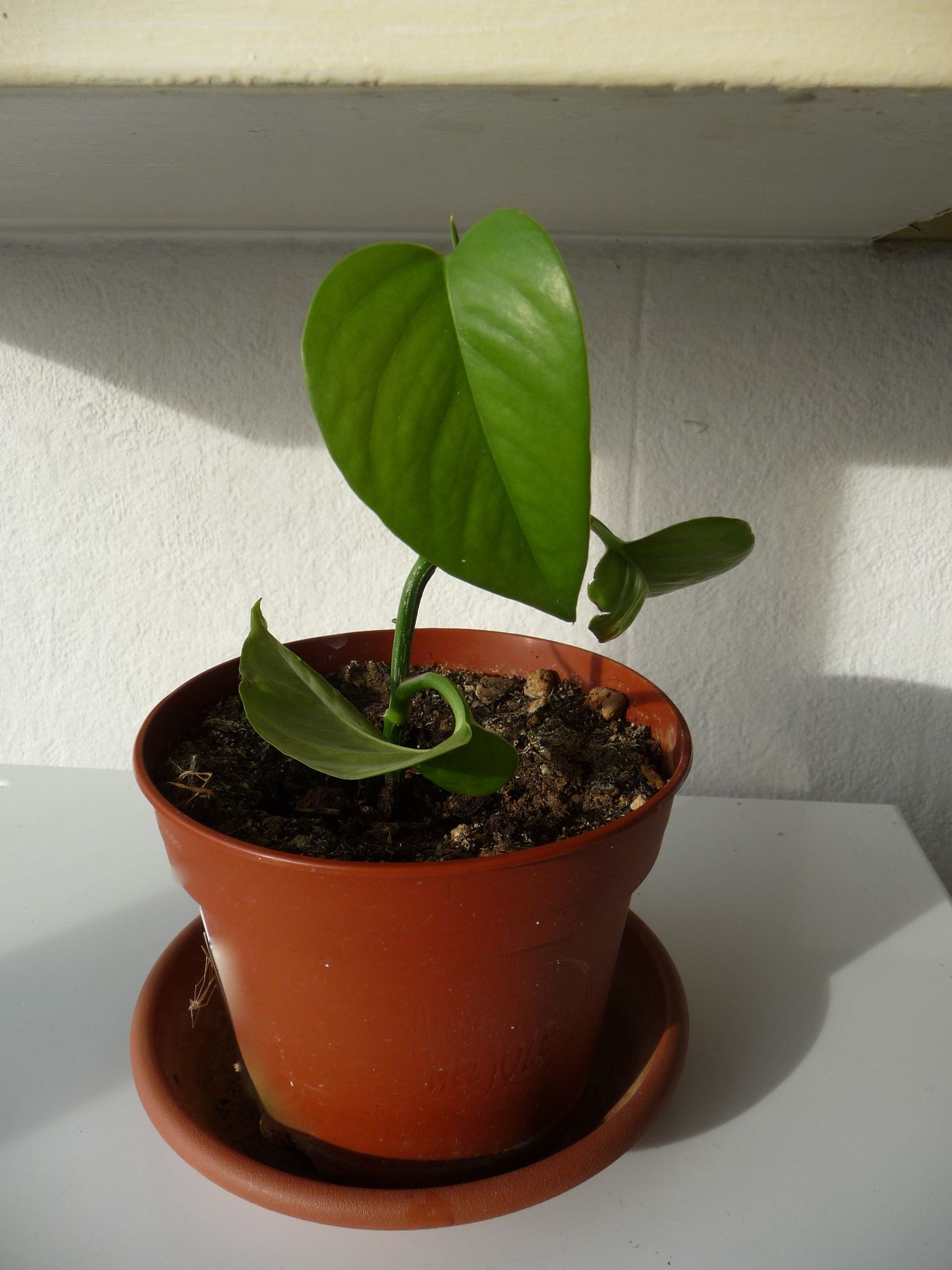 Comment r aliser une bouture de plante d polluante le for Plante truffaut