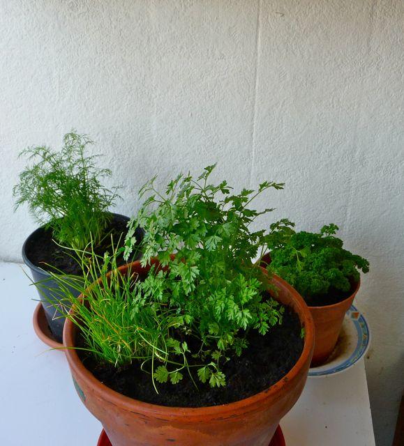 Jardin Aromatique Intérieur réaliser un mini-jardin d'intérieur en cultivant des plantes