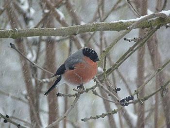 pr parer le plan grand froid pour les oiseaux pourquoi quand et comment les nourrir page. Black Bedroom Furniture Sets. Home Design Ideas