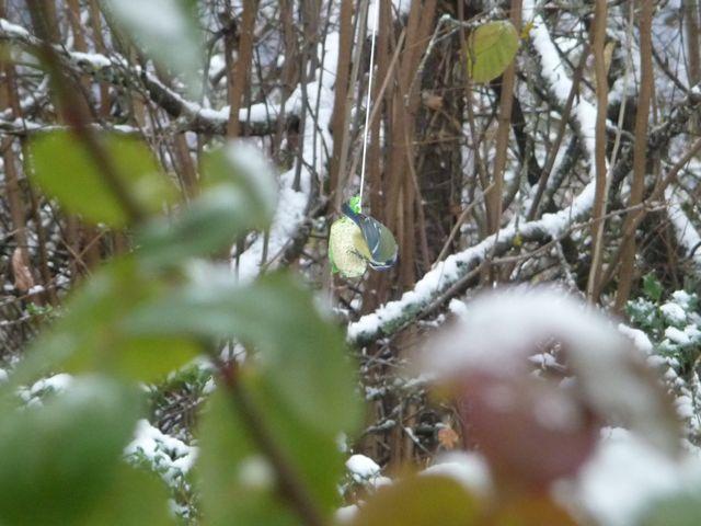 Pr parer le plan grand froid pour les oiseaux pourquoi - Comment faire fuir les oiseaux ...