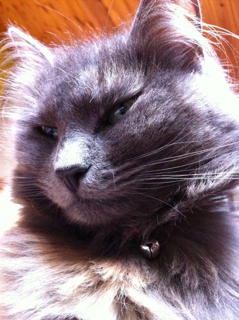 Comment viter que votre chat mange les oiseaux du jardin michelle l 39 amie des animaux - Comment empecher un chat d uriner partout ...