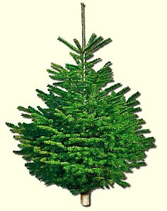 Arbre de no l sapin naturel ou artificiel consommer durable - Branche de sapin artificiel ...