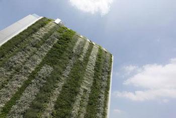 Mur-végétal