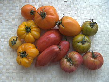 Quelques représentants de la brigade des tomates.
