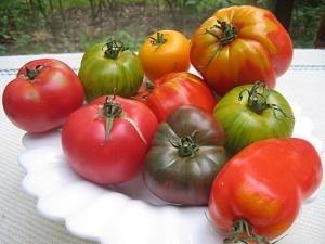 Tomates du jardin : les rouges écarlates ne sont pas forcément les meilleures !
