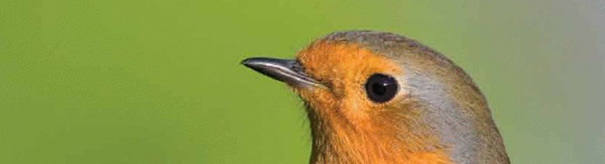 oiseau-soigner