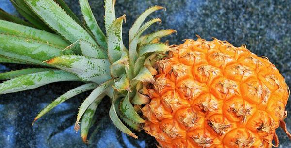 ananas-faire-pousser