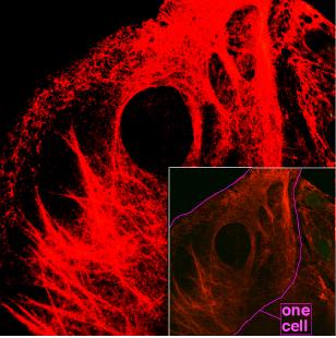 fibres-cellule-keratine
