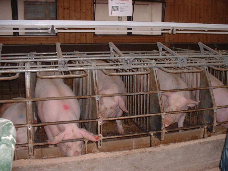 Cruauté envers les animaux