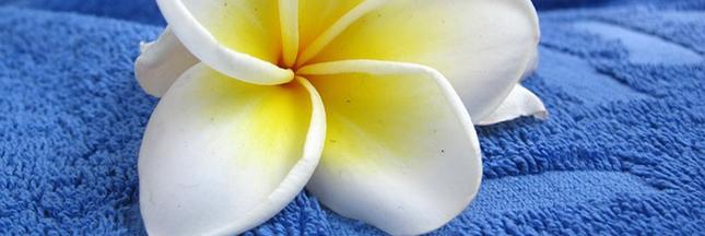 fleur-linge-de-maison-lessive-serviette-de-toilette