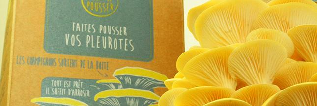 prêt-a-pousser-champignons-00-ban