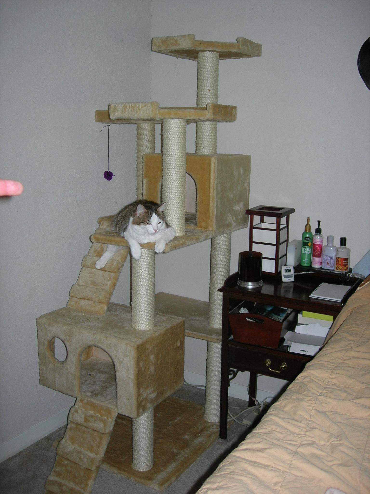 Comment Fabriquer Un Arbre À Chat bricolage : faire soi-même son arbre à chat : écologique et