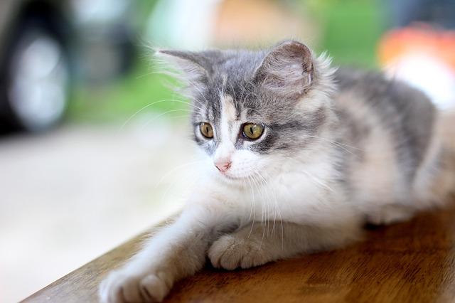 arbre à chat diy fait maison bricolage