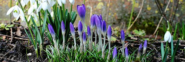 Conseils le nettoyage de printemps pour votre jardin for Nettoyage jardin printemps