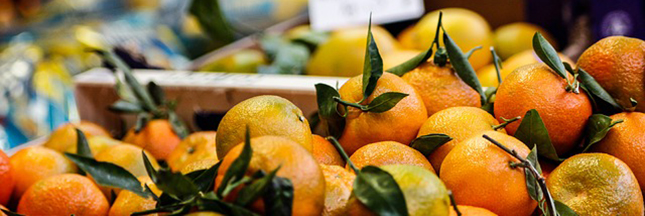 oranges-agrumes-alimentation-fruits-00-ban