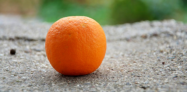 oranges-agrumes-alimentation-fruits-01