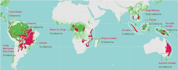 déforestation dans le monde