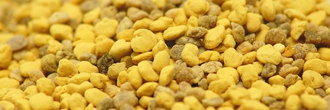 abeille-allergie-au-pollen-sante-00-ban