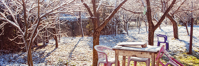 jardin hiver conseils