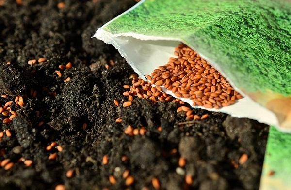 conserver graines