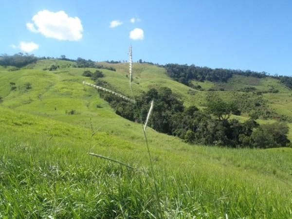 paysage deforeste