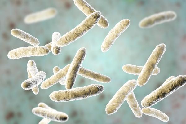 Nos intestins abritent des milliards de bacteries - © SizeSquares